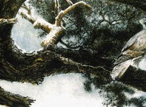 Robert Bateman-goshawk