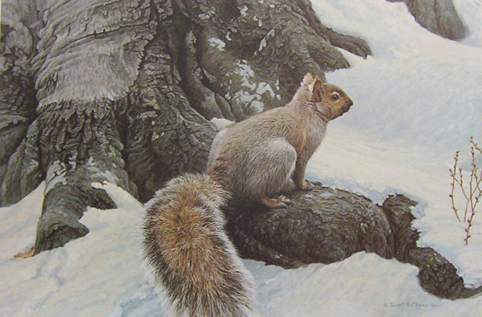Robert Bateman-gray squirrel