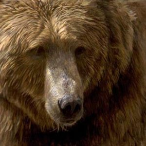 Robert Bateman-grizzly head