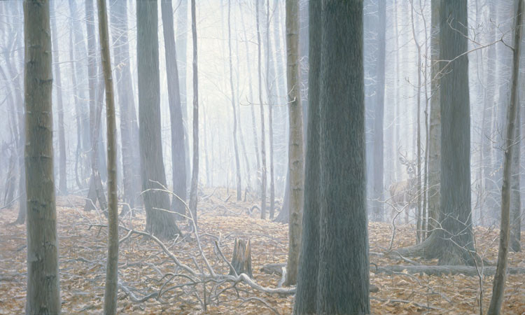 Robert Bateman-hardwood forest white taildeer