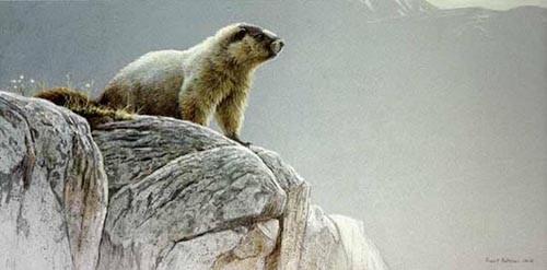 Robert Bateman-hoary marmot
