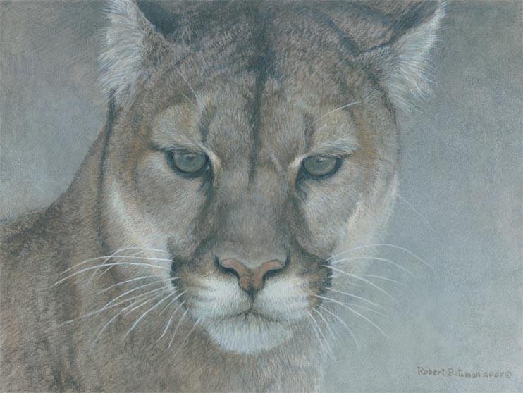 Robert Bateman-intent cougar