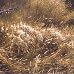 Robert Bateman-kestrel and grasshopper