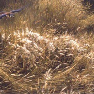 Robert Bateman-kestrel and grasshopper