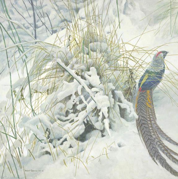 Robert Bateman-lady amhearst pheasant