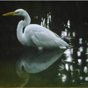 Robert Bateman-mangrove shadow common egret