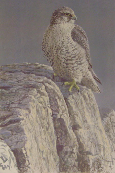 Robert Bateman-mountain monarch gyrfalcon