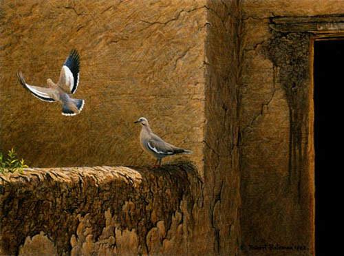 Robert Bateman-old adobe white winged doves