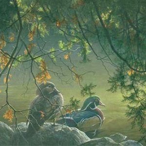 Robert Bateman-on the pond wood ducks