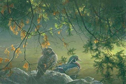 Robert Bateman-on the pond wood ducks