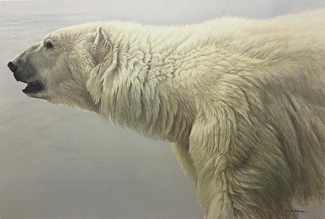 Robert Bateman-polar bear profile