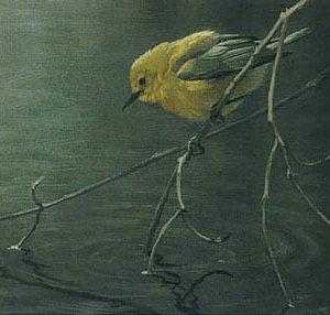 Robert Bateman-prothonotary warbler