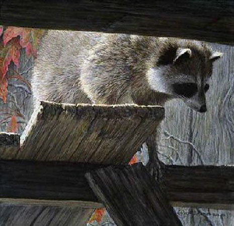 Robert Bateman-prowler raccoon