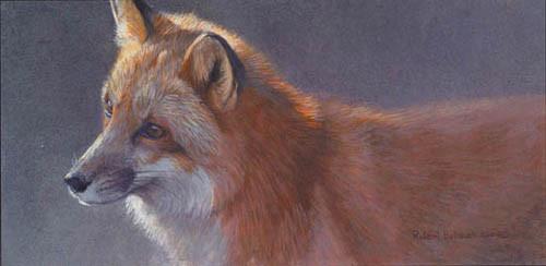 Robert Bateman-questing red fox