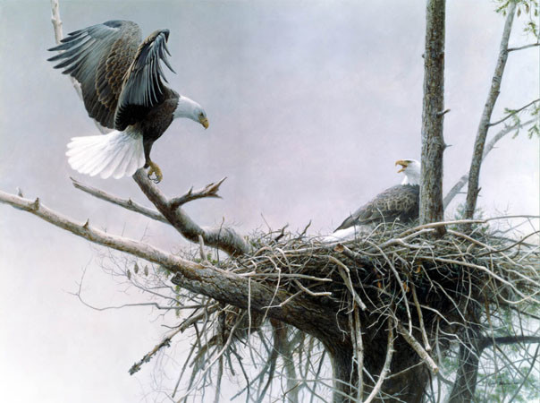 Robert Bateman-return bald eagle pair