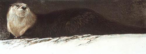 Robert Bateman-river otter