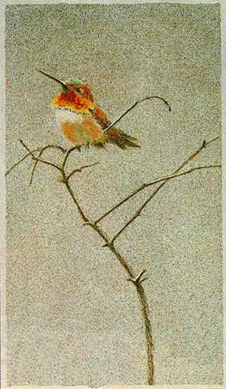 Robert Bateman-rufus hummingbird
