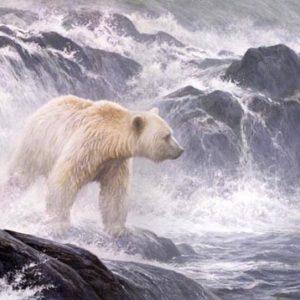 Robert Bateman-salmon watch spirit bear