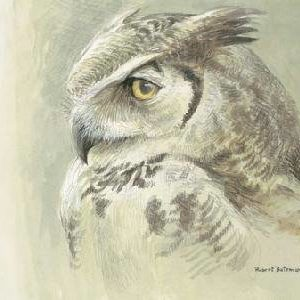 Robert Bateman-samantha great horned owl