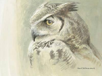 Robert Bateman-samantha great horned owl
