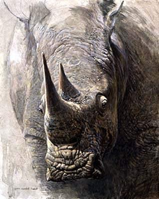 Robert Bateman-sappi white rhinoceros