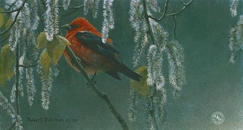 Robert Bateman-scarlet tanager and alder blossoms