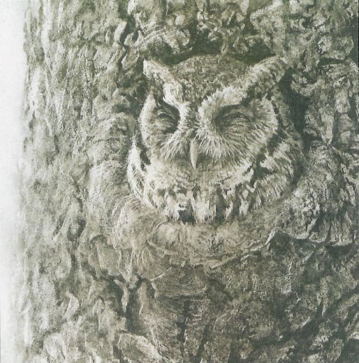 Robert Bateman-screech owl in apple tree