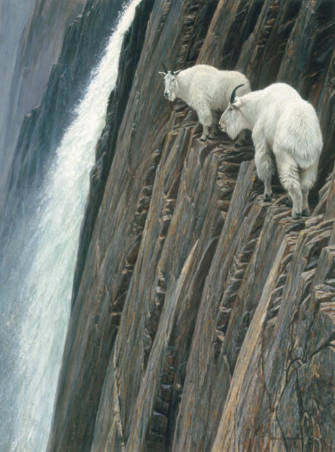 Robert Bateman-sheerdrop mountain goats