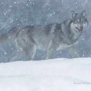 Robert Bateman-snowfall wolf
