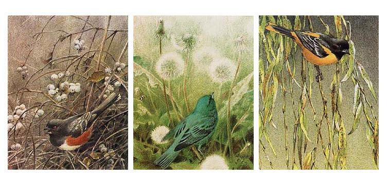 Robert Bateman-song bird set