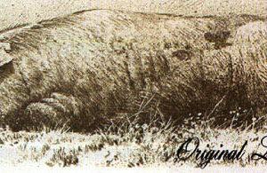 Robert Bateman-spanish pig