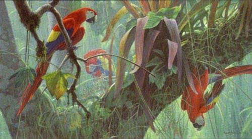 Robert Bateman-tropical canopy scarlet macaws