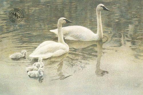Robert Bateman-trumpeter swan family