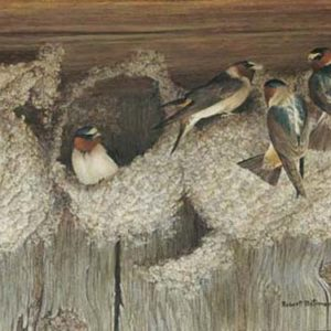 Robert Bateman-under construction cliff swallows