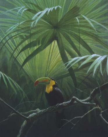 Robert Bateman-under the canopy toucan