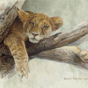 Robert Bateman-up a tree lion cub