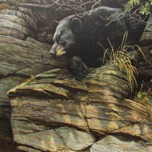 Robert Bateman-watchful repose black bear
