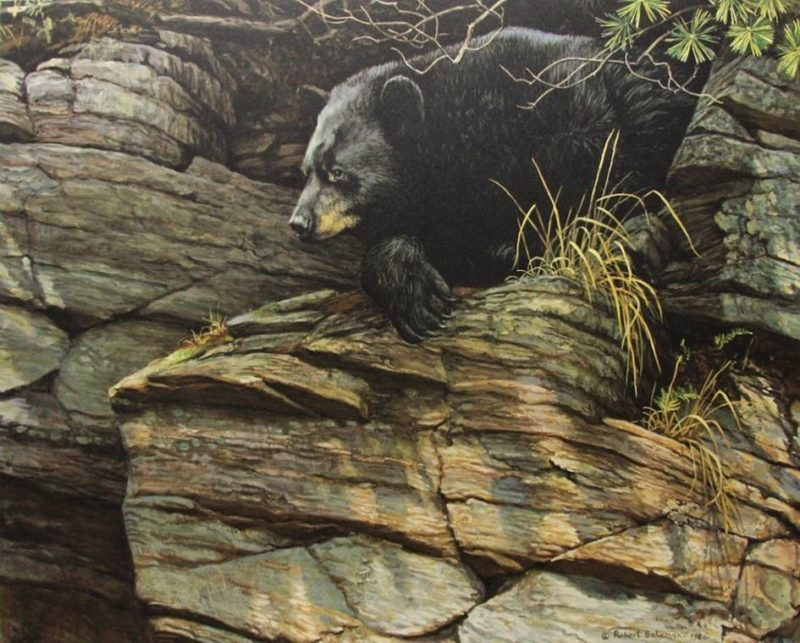 Robert Bateman-watchful repose black bear