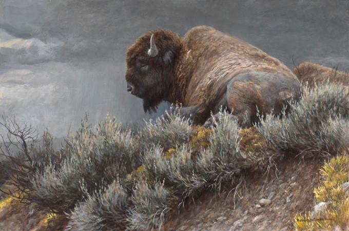 Robert Bateman-weather watch bison