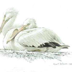 Robert Bateman-white pelican