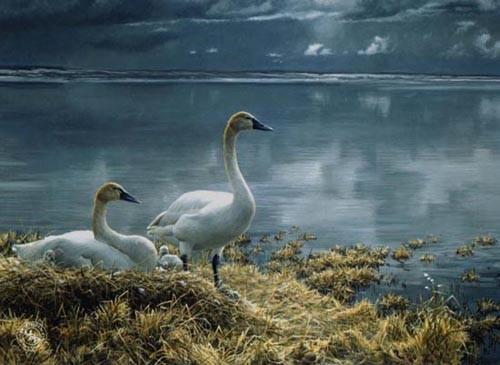 Robert Bateman-wide horizon tundra swans premier