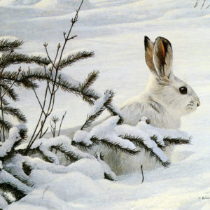 Robert Bateman-winter snowshoe hare