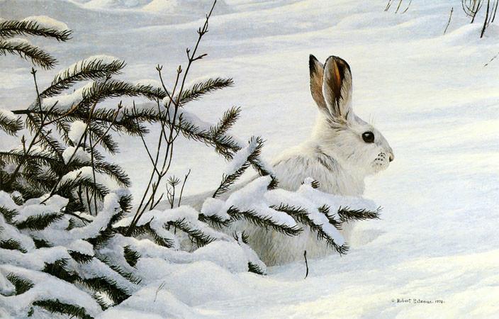 Robert Bateman-winter snowshoe hare