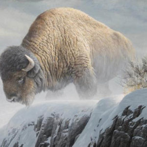 Robert Bateman-winter bison
