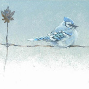Robert Bateman-winter blues bluejay