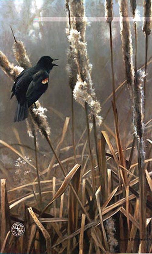 Robert Bateman-winter cattails red winged blackbird