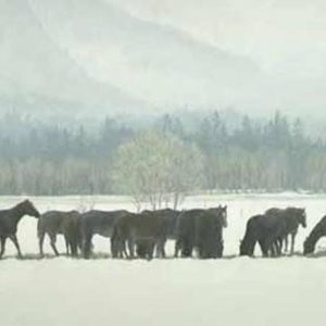Robert Bateman-winter gathering horseherd