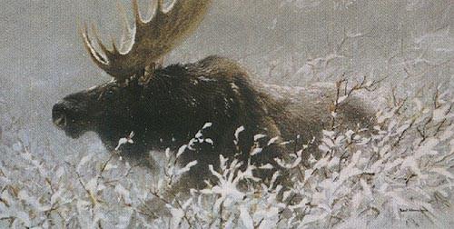 Robert Bateman-winter run bull moose