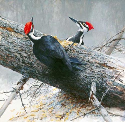 Robert Bateman-woodworkers pileated woodpeckers