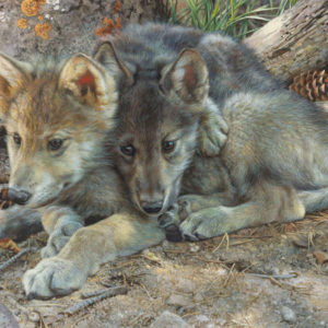 carl brenders-brotherly love wolf pups
